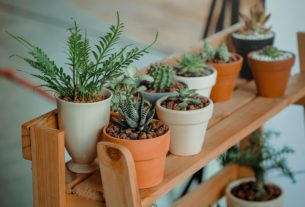 2020 Best-Selling Indoor Plants on Amazon