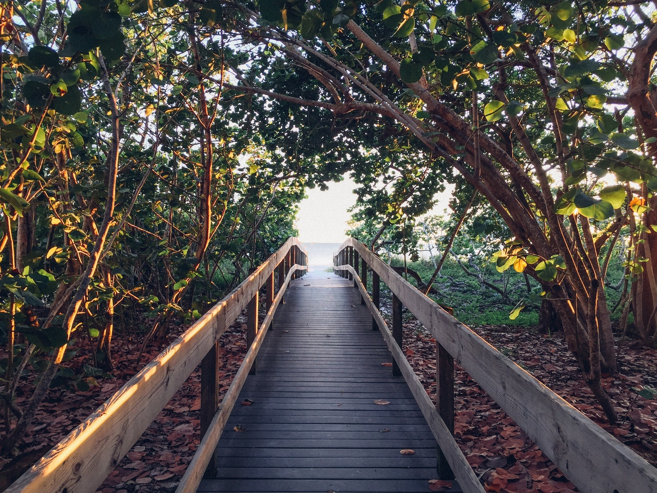 The Positive Effects Of Nature On Your Well-Being